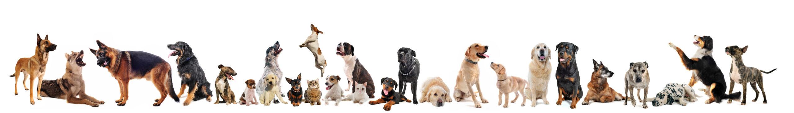 Online classes animal portraits |