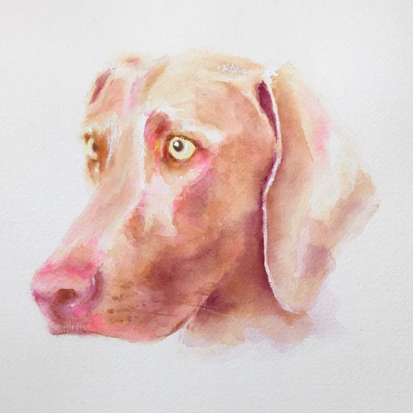Weimaraner watercolour